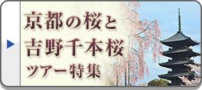 京都の桜と吉野千本桜