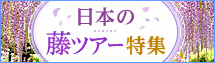 藤ツアー・旅行(あしかがフラワーパーク・河内藤園・亀戸天神社)