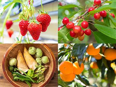 フルーツ(果物)狩り・野菜収穫ツアー特集