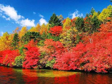 四季の華 秋の紅葉特集