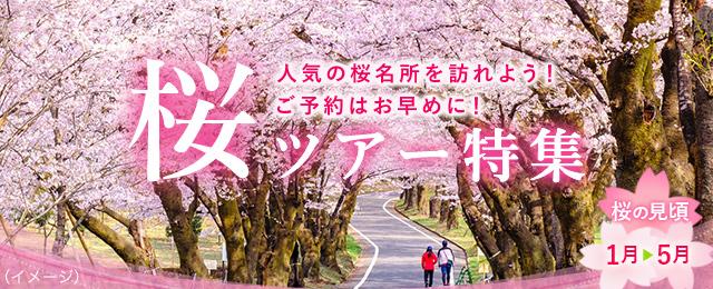 桜 2021 京都 開花 予想