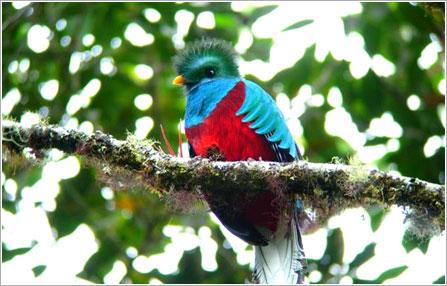 観光地情報|キューバ・中米諸国とコロンビア旅行・ツアー|南米