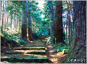 大阪 発 熊野 古道 ツアー