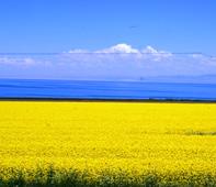 青海湖(イメージ)