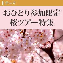 おひとり参加限定桜ツアー特集